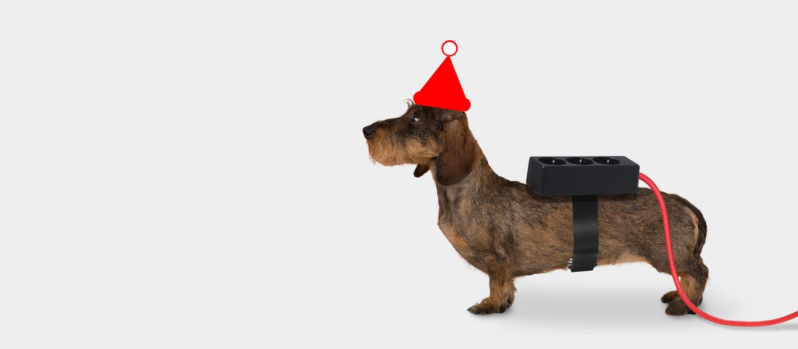 20170123dackelmitsteckdose_weihnachten